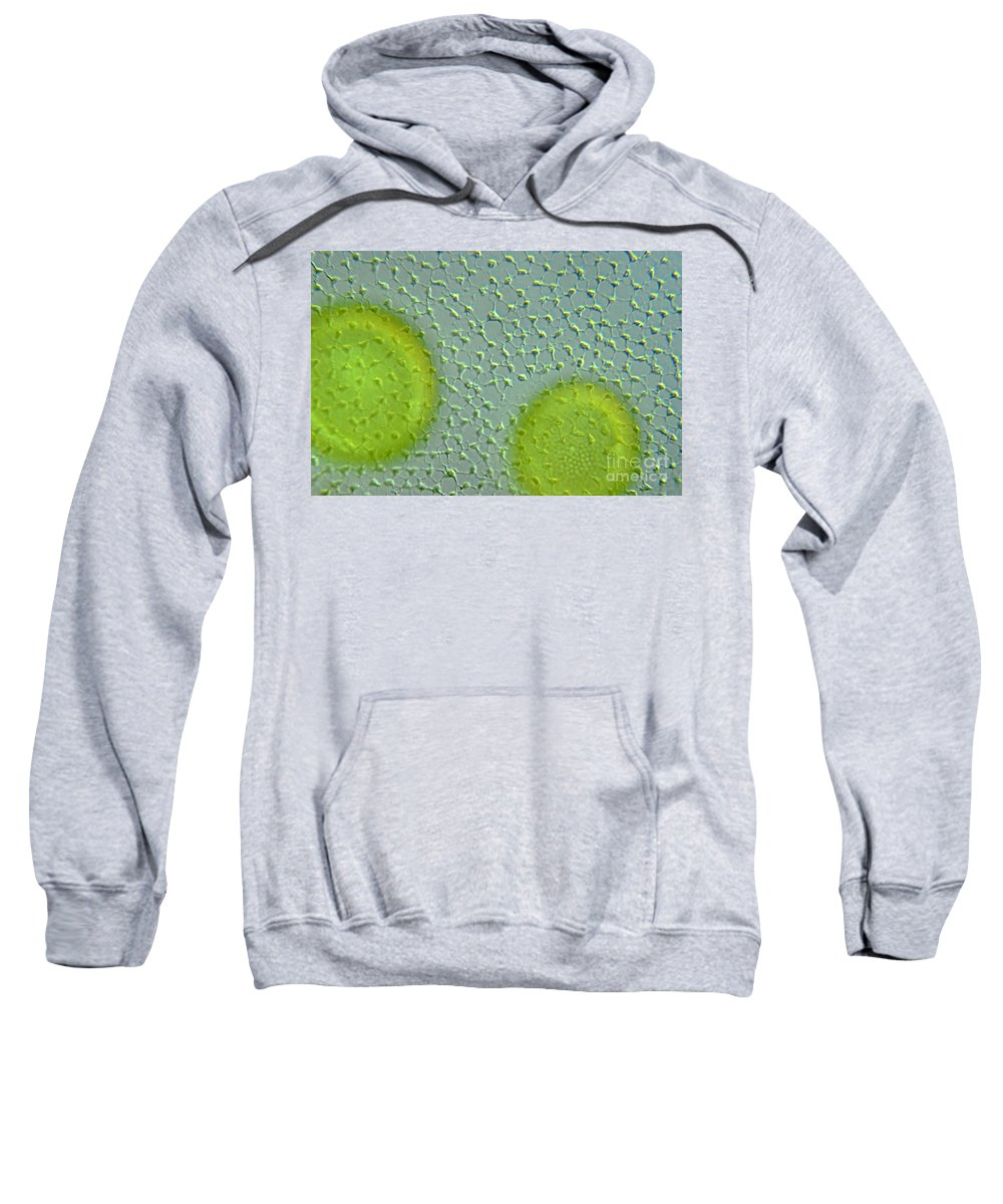 Histology Sweatshirt featuring the photograph Volvox Globator Surface View Of Colony by M I Walker