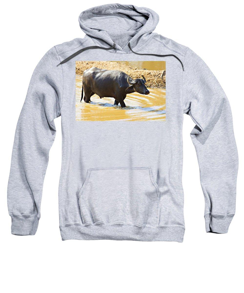 Water Buffalo Sweatshirt featuring the photograph Water Buffalo by Douglas Barnard