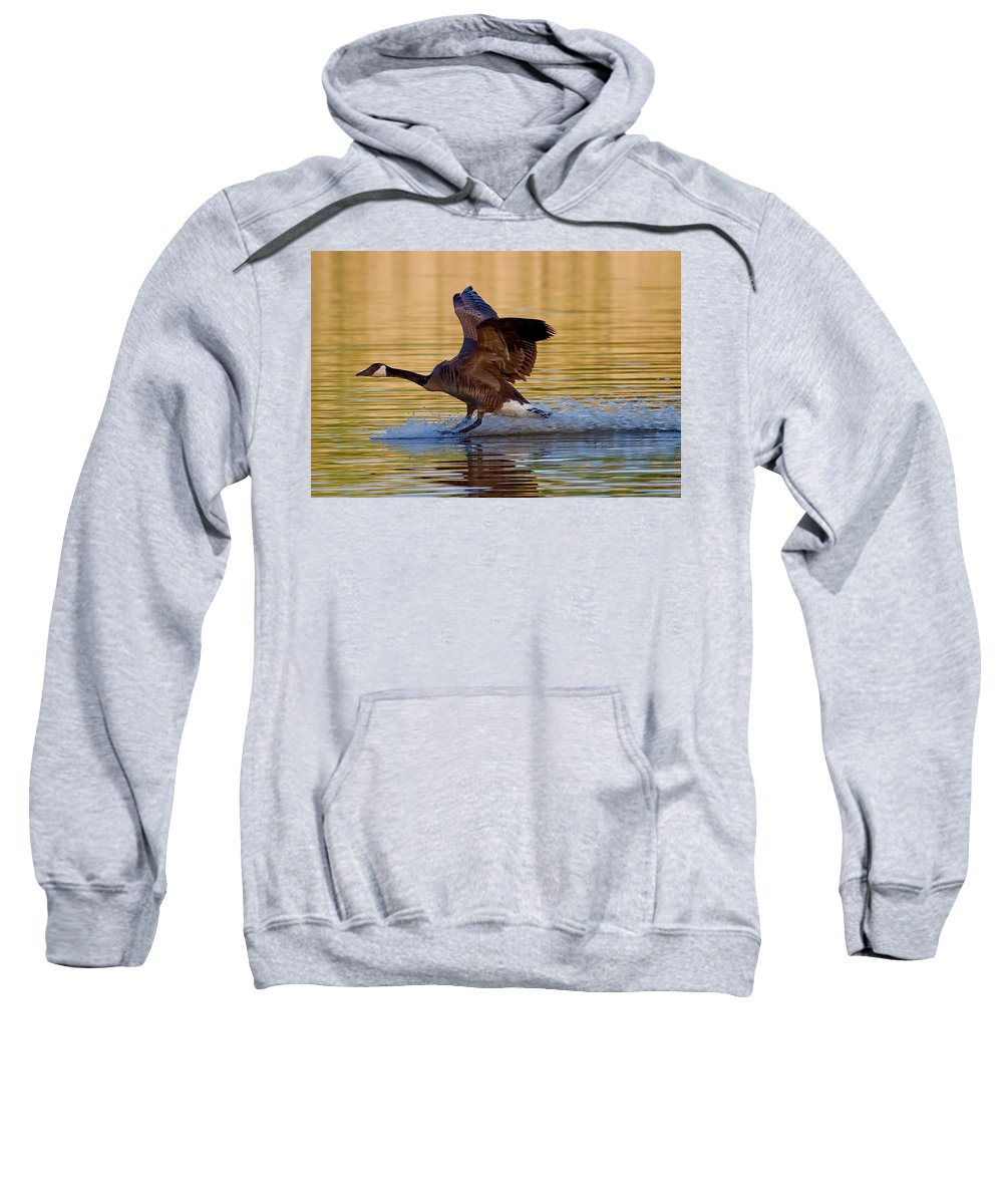 Species Branta Canadensis Sweatshirt featuring the photograph Water Landing by Bill Lindsay