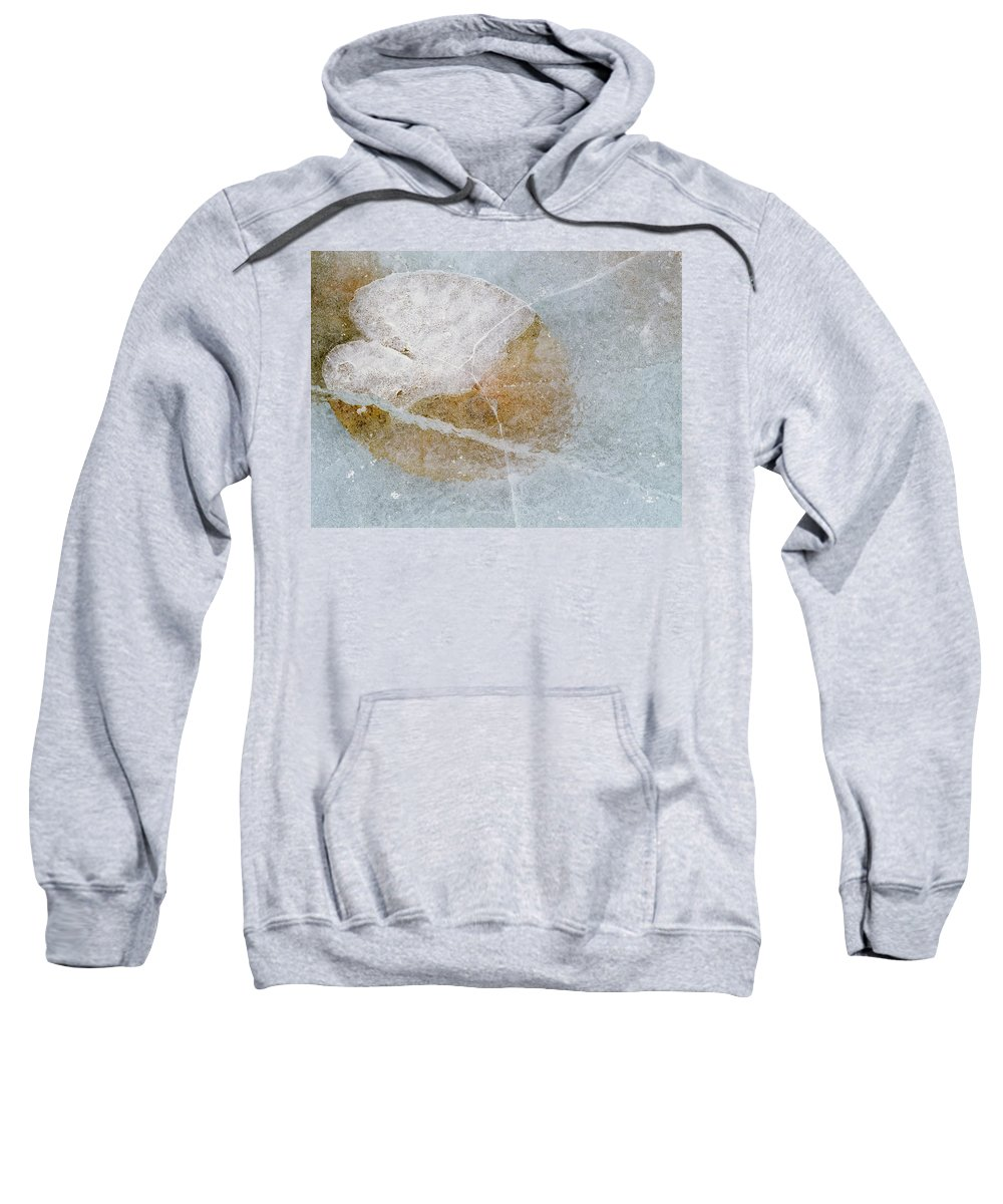 Light Sweatshirt featuring the photograph Water Lily Leaf In Ice, Boggy Lake by Darwin Wiggett