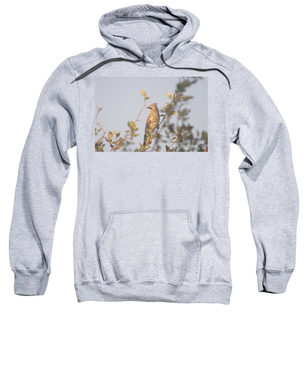 Birds Sweatshirt featuring the photograph Wax Wing In Sunshine by Jeff Swan
