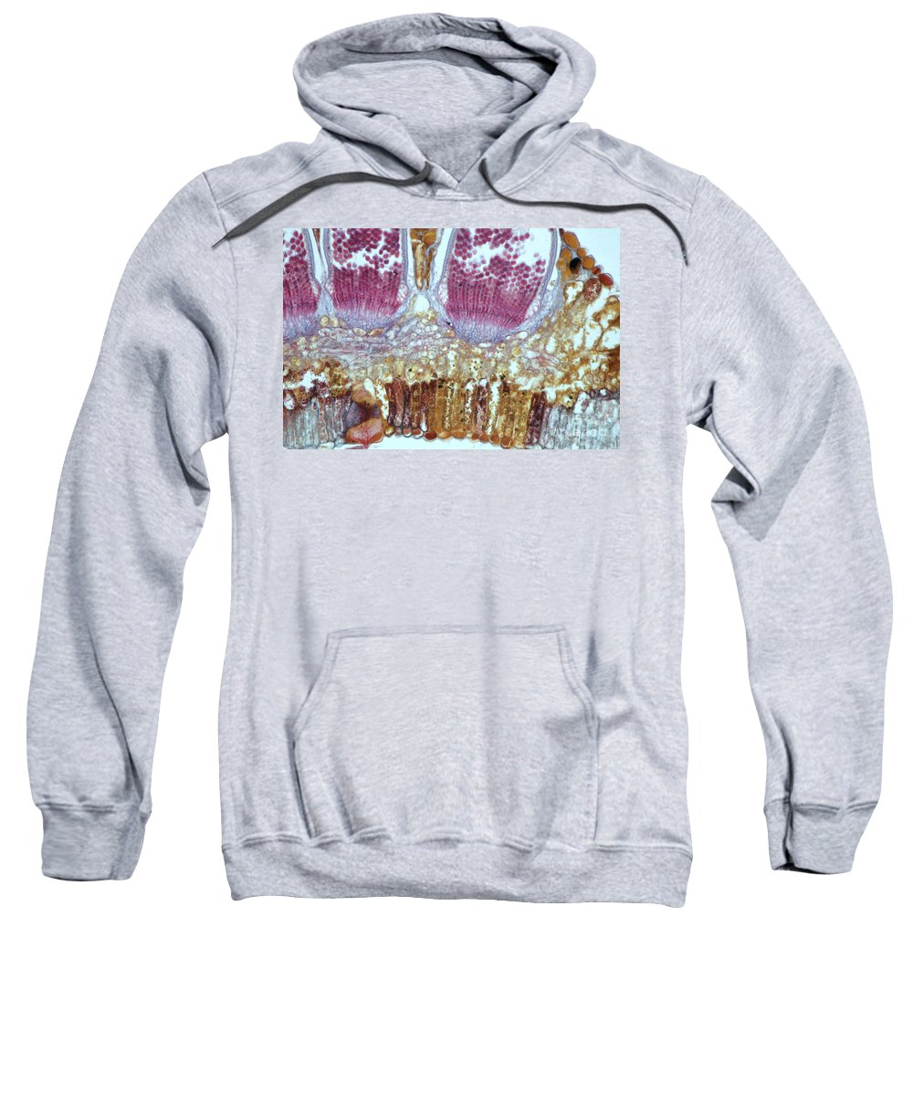 Science Sweatshirt featuring the photograph Wheat Rust Puccinia Graminis by M. I. Walker