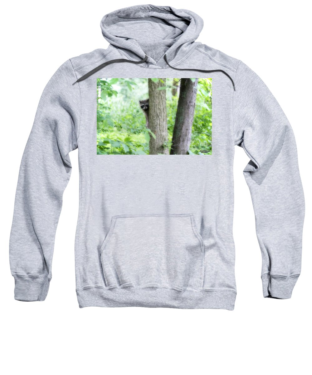 Raccoon Sweatshirt featuring the photograph When Raccoon Dream by David Arment