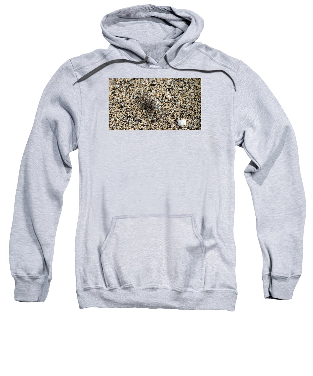 Crab Sweatshirt featuring the photograph Where's The Crab by Elizabeth Harshman