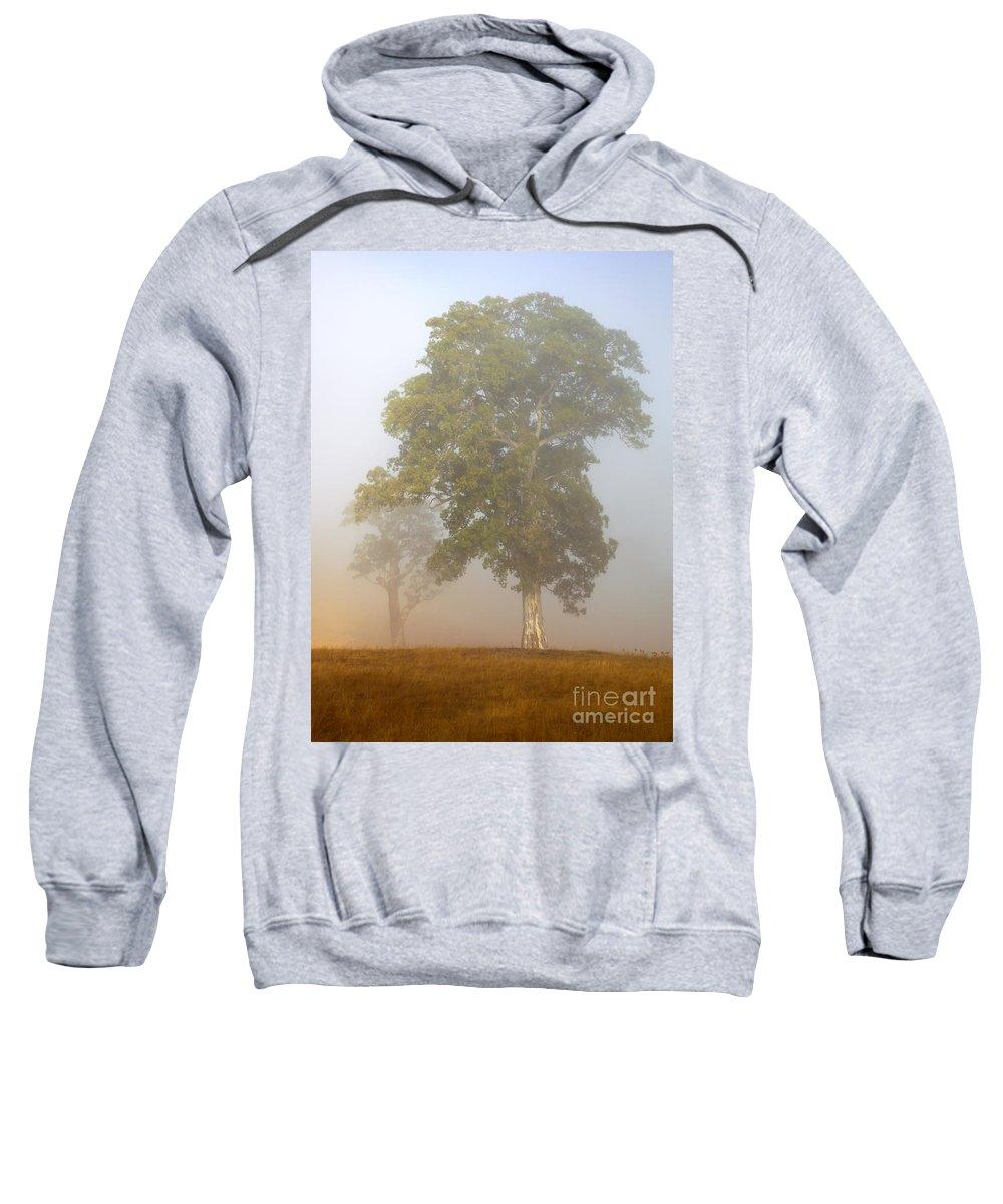 White Gum Tree Sweatshirt featuring the photograph White Gum Dawn by Mike Dawson
