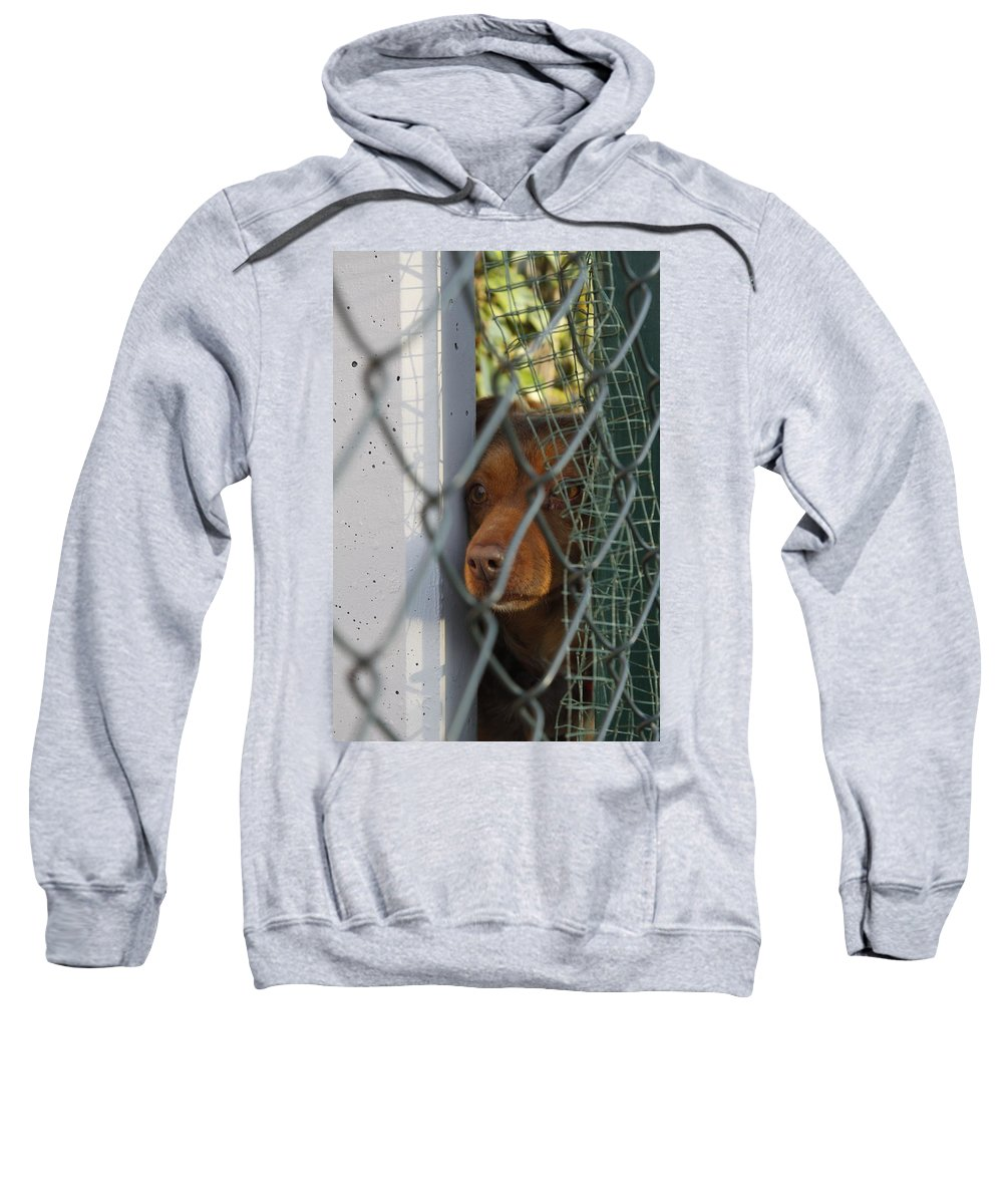 Dog Sweatshirt featuring the photograph Why by Donato Iannuzzi