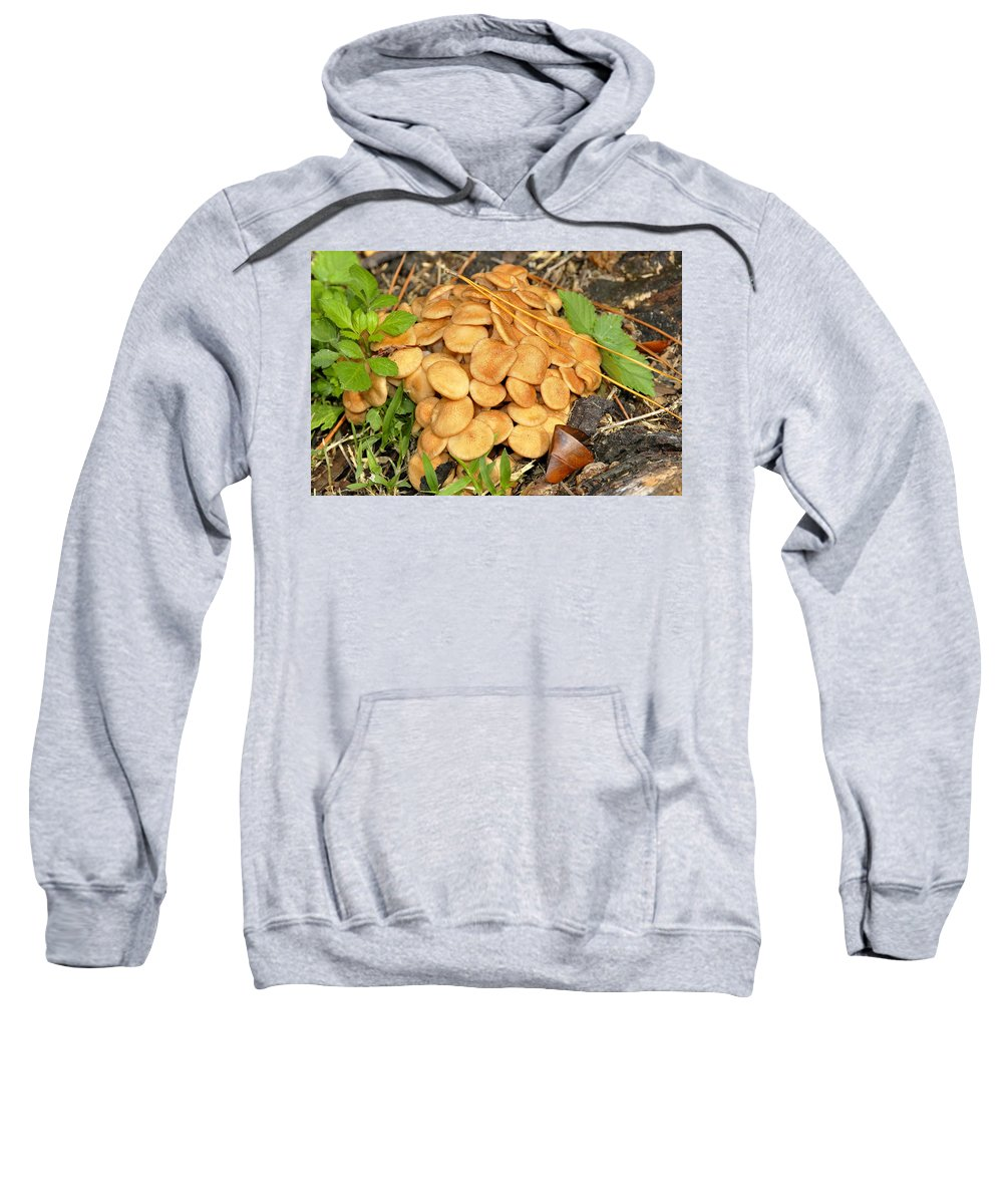 Fine Art Photography Sweatshirt featuring the photograph Wild Bunch by David Lee Thompson