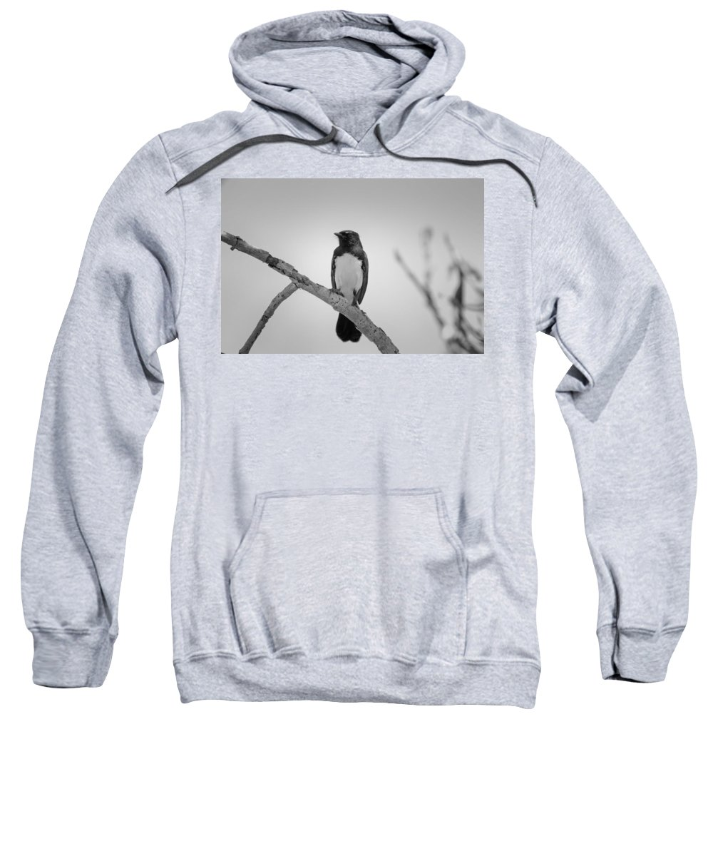 Willie Wagtail Sweatshirt featuring the photograph Willie Wagtail V2 by Douglas Barnard