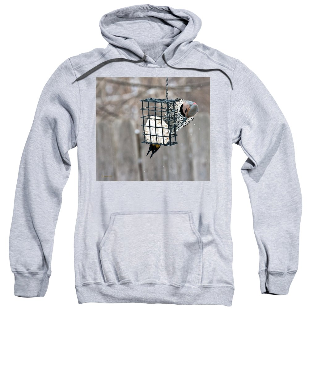 Yellow Shafted Northern Flicker Sweatshirt featuring the photograph Winter Feeding by Edward Peterson