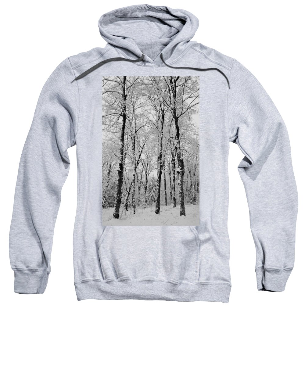 Branches Sweatshirt featuring the photograph Winter Wonderland by David Chapman