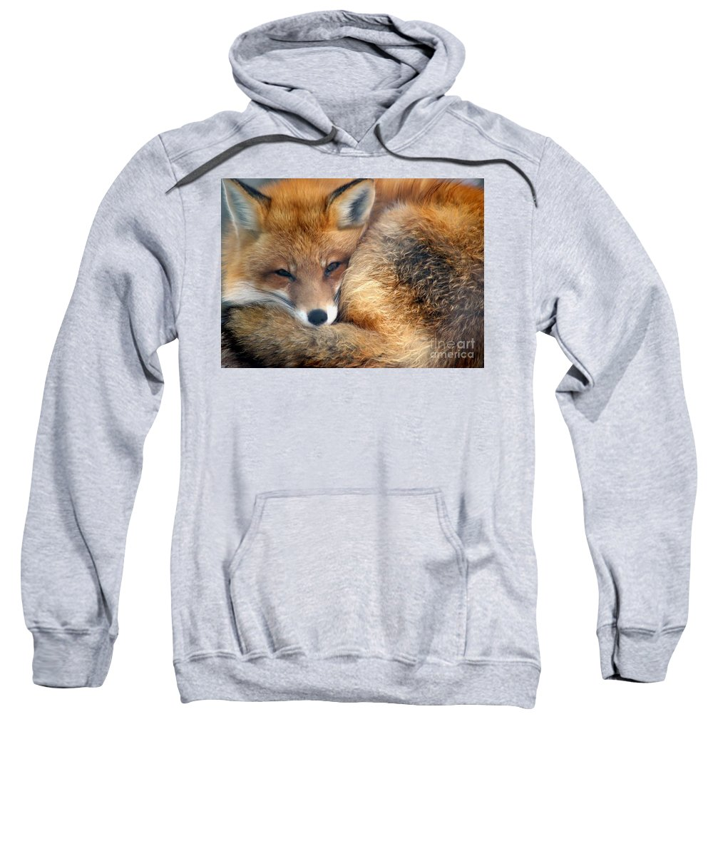 Red Fox Sweatshirt featuring the photograph Winter's Chill by Living Color Photography Lorraine Lynch