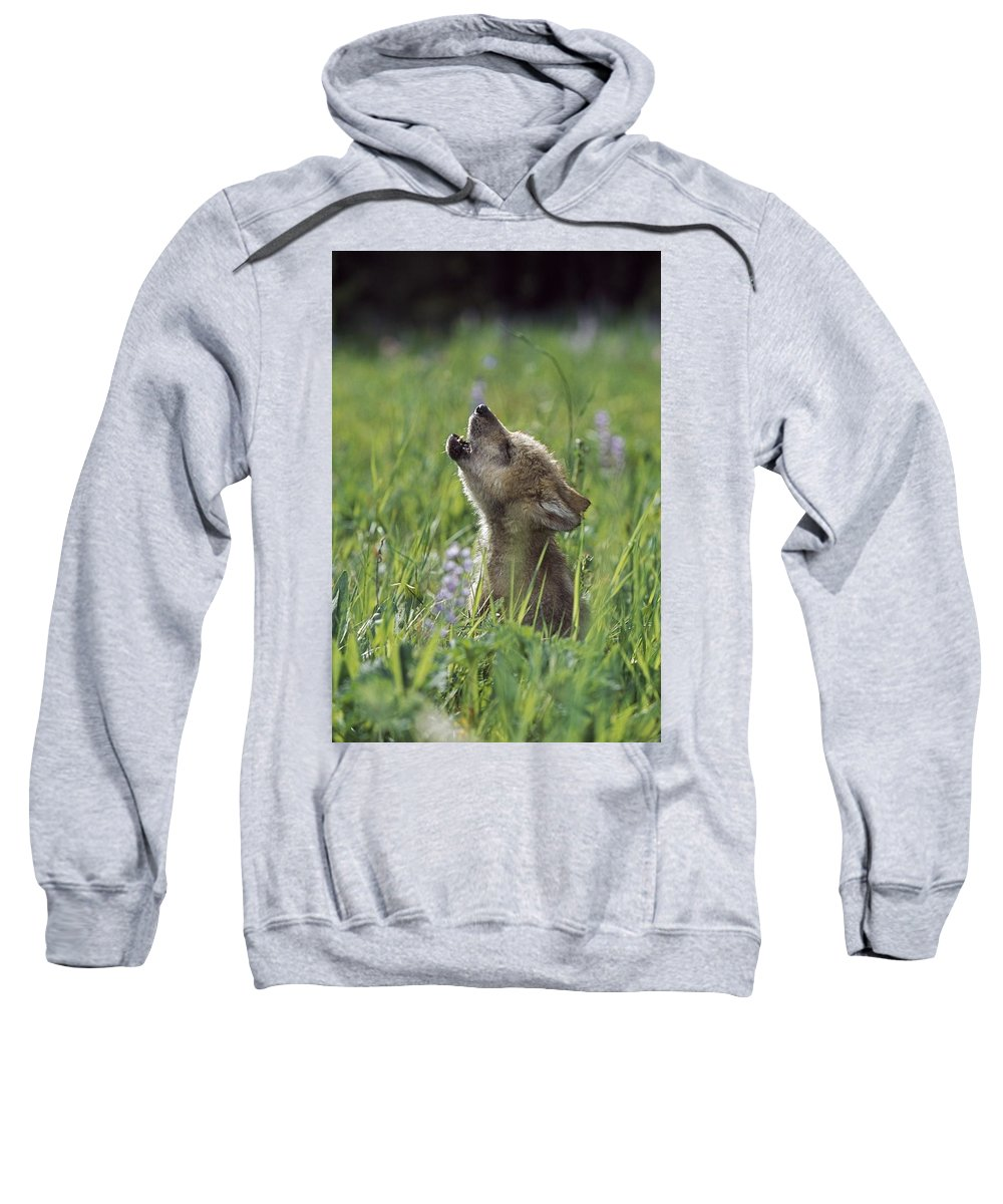 Baby Animal Sweatshirt featuring the photograph Wolf Puppy Howling In Mountain Meadow by David Ponton