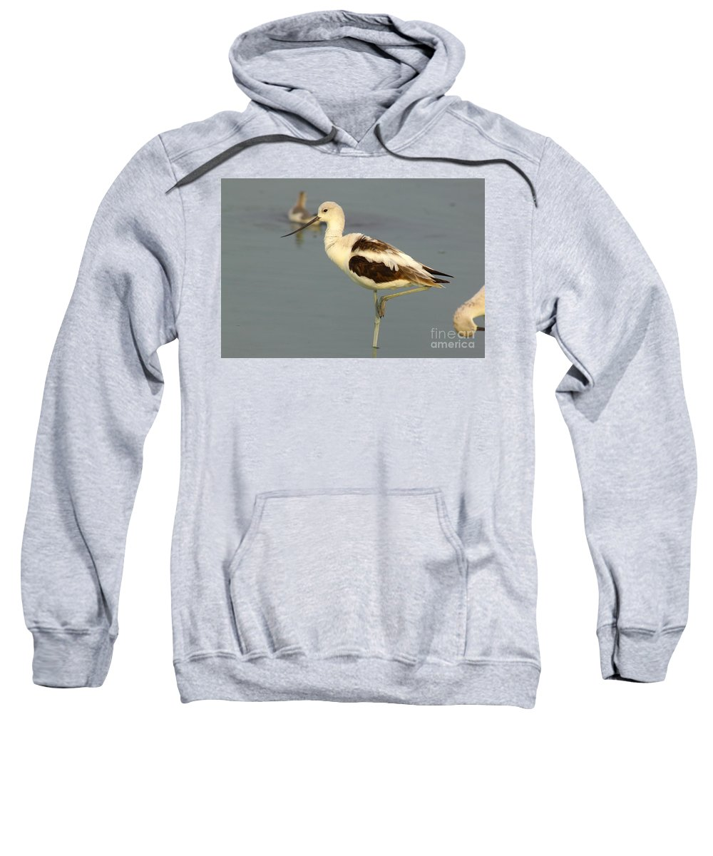Animals Sweatshirt featuring the photograph Young American Avocet by Robert Frederick