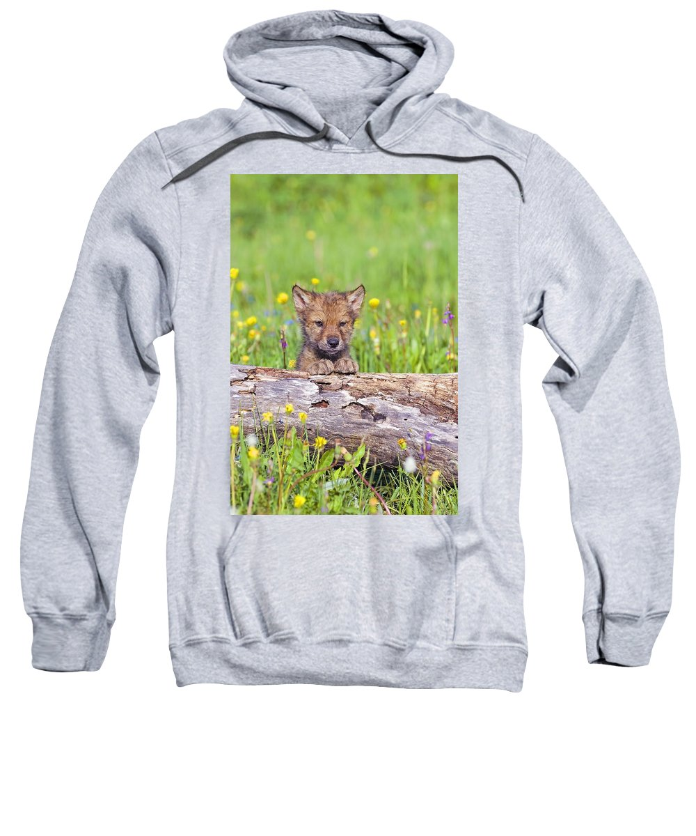 Animal Sweatshirt featuring the photograph Young Wolf Cub Peering Over Log by John Pitcher