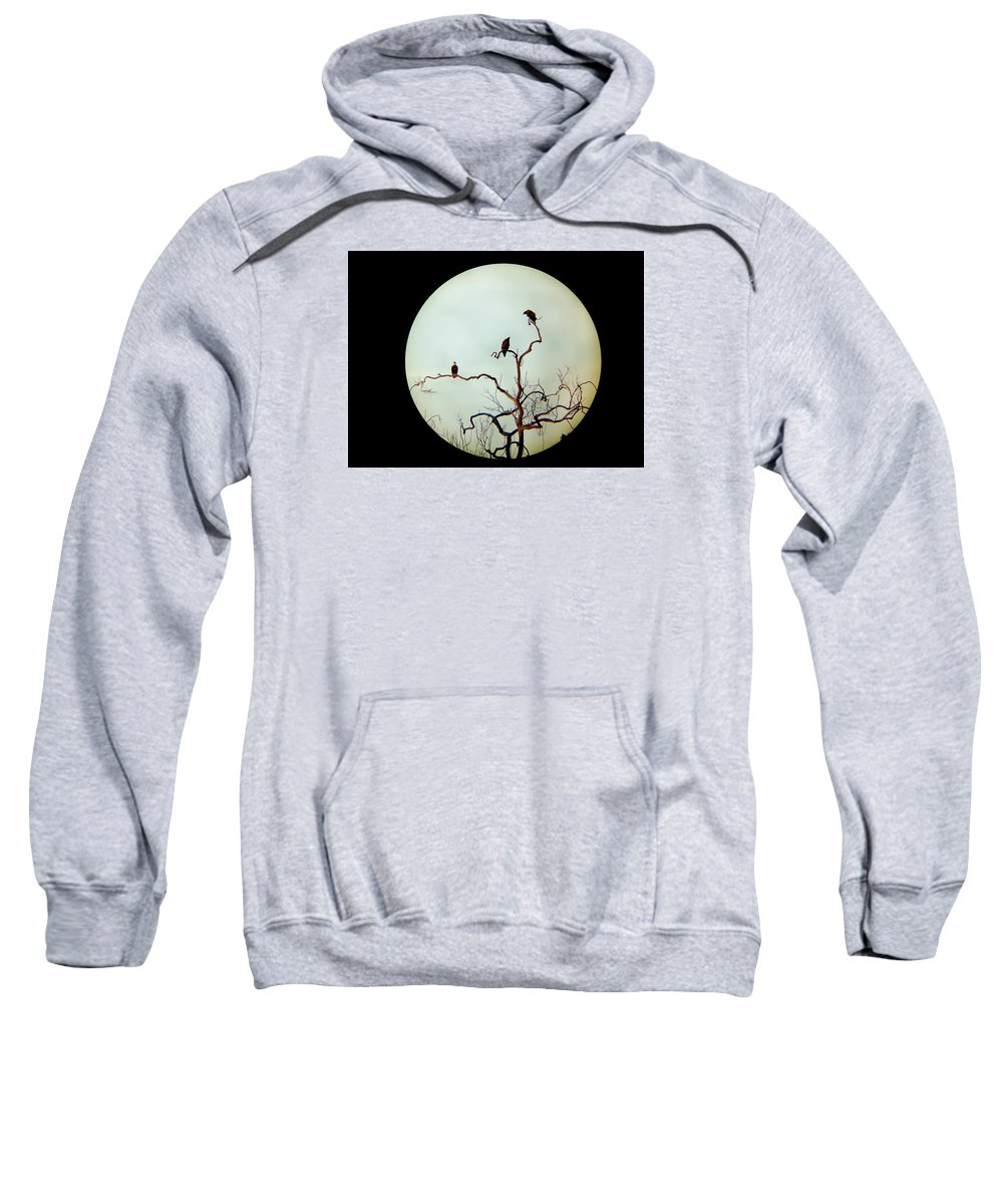 Bald Eagle Sweatshirt featuring the photograph Bald Eagle And Two Juveniles by Monte Landis