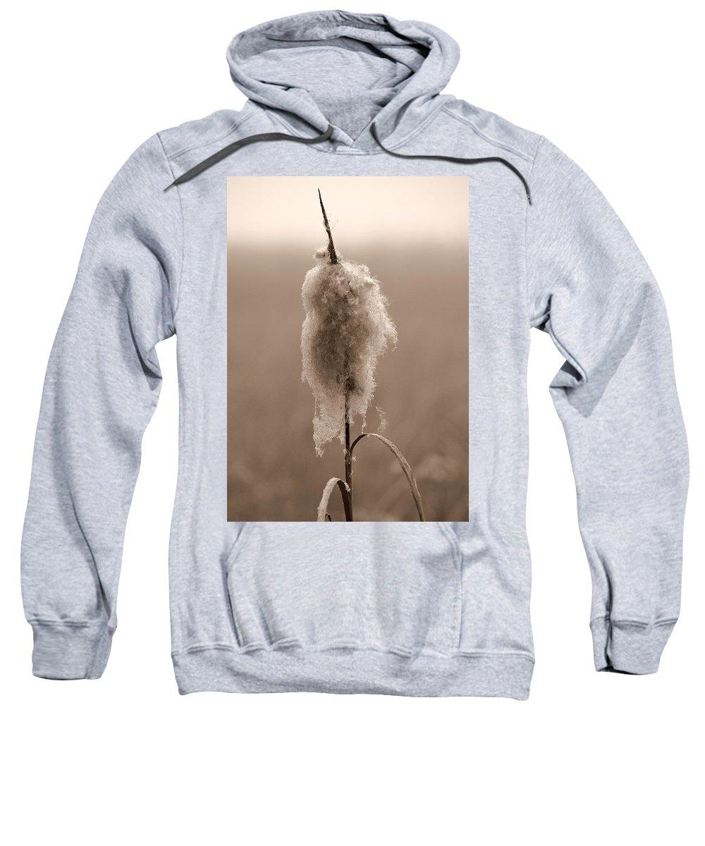 Lehtokukka Sweatshirt featuring the photograph Broadleaf Cattail 2 by Jouko Lehto