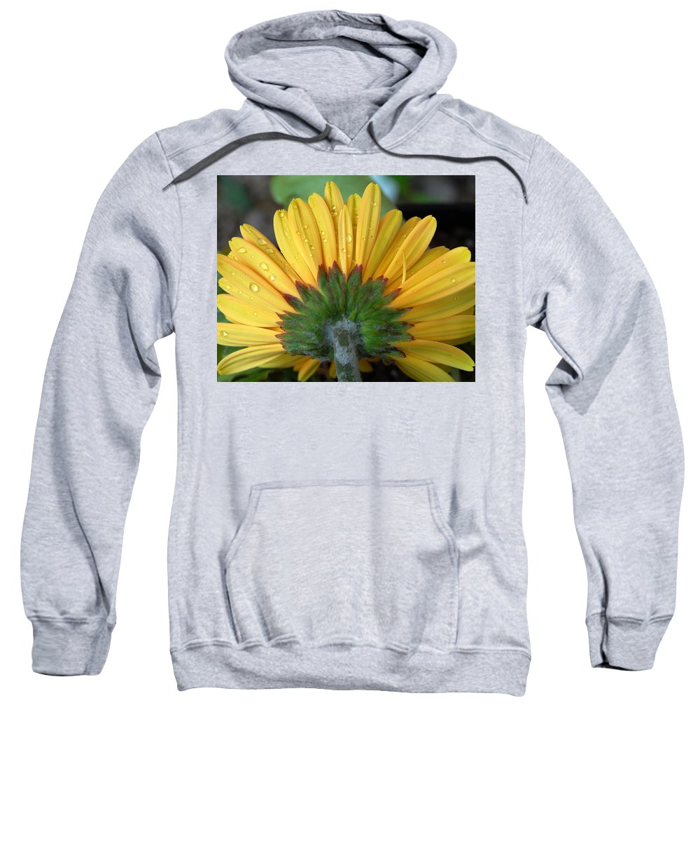 Flowers Sweatshirt featuring the photograph Water Drops On Gerbera Daisy by Amy Fose