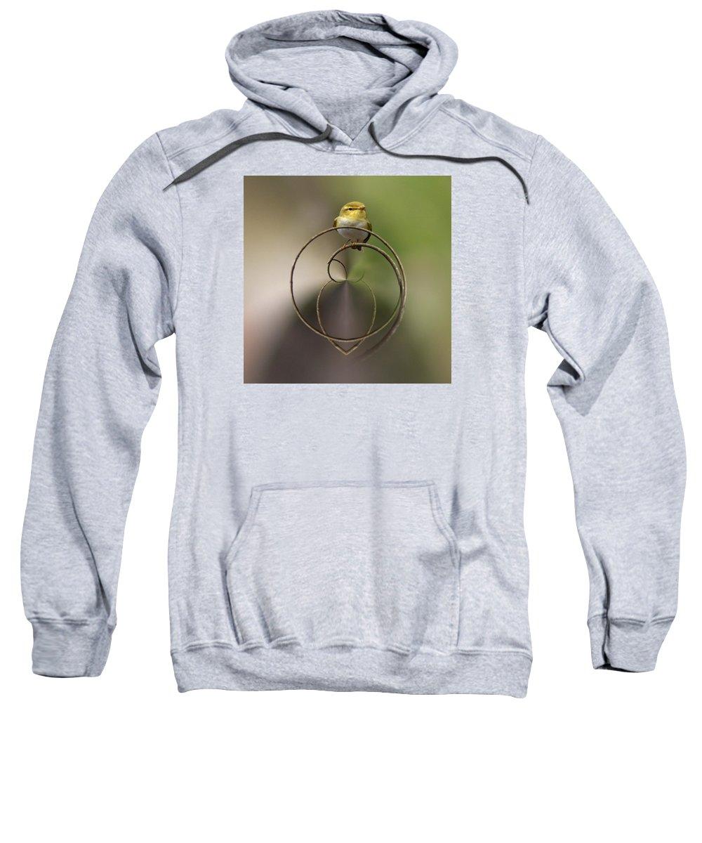 Lehtokukka Sweatshirt featuring the photograph Wood Warbler by Jouko Lehto