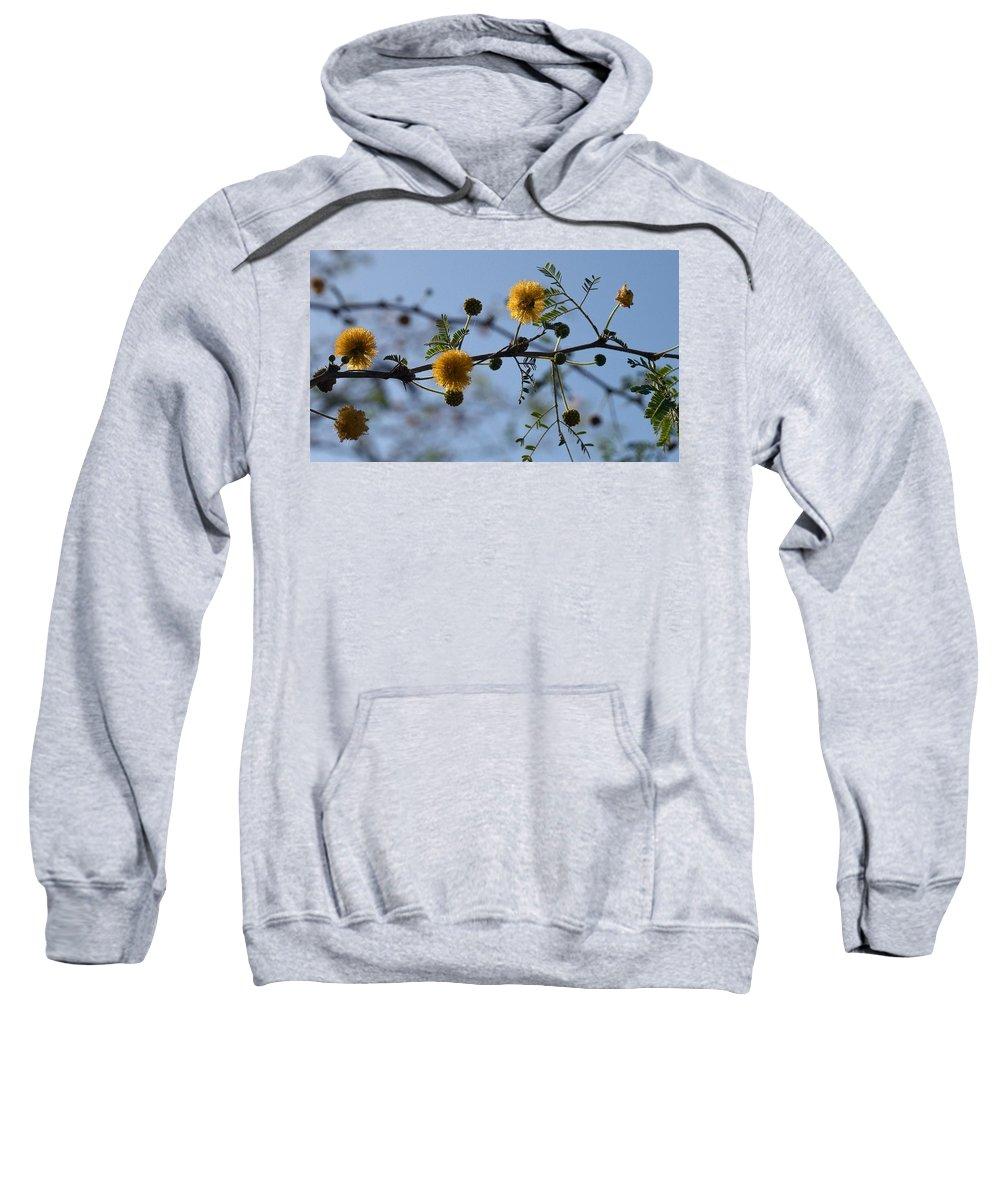 Lehtokukka Sweatshirt featuring the photograph Yellow Minosa by Jouko Lehto