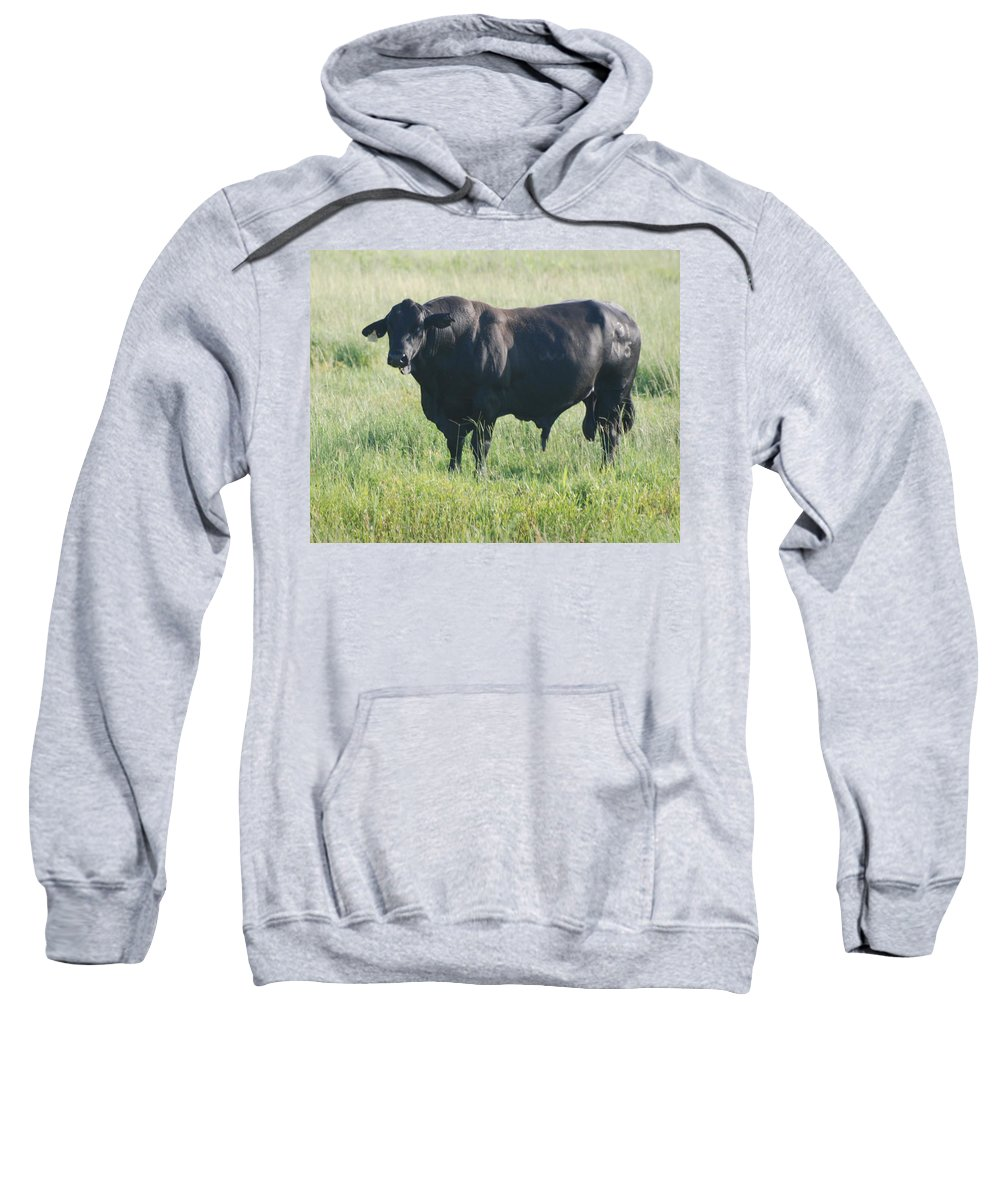 Cow Sweatshirt featuring the photograph American Cow by Rob Hans
