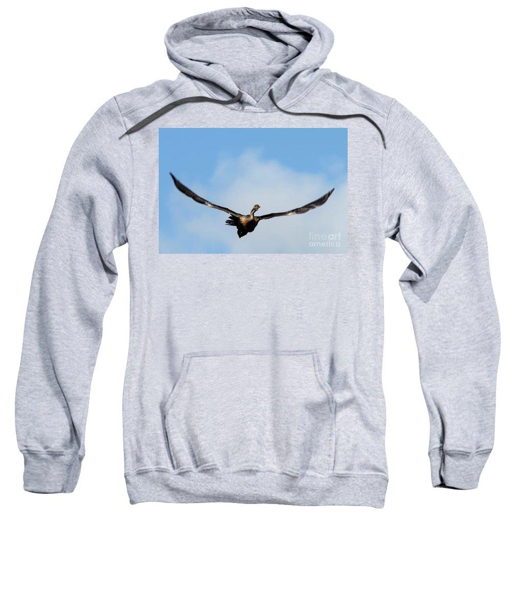 Anhinga Sweatshirt featuring the photograph Anhinga In Flight by Rodney Cammauf