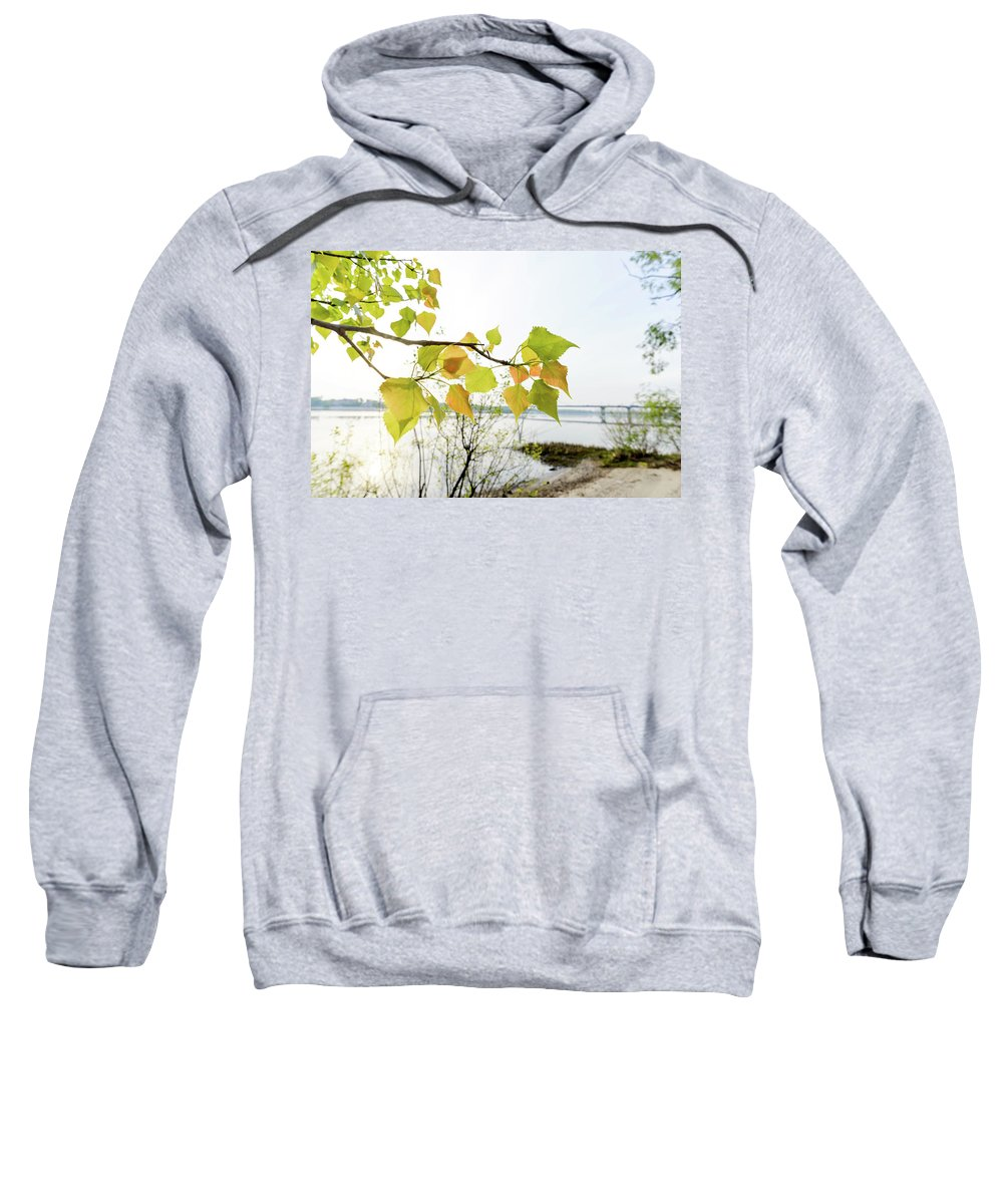 Abele Sweatshirt featuring the photograph Backlit Poplar Leaves by Alain De Maximy