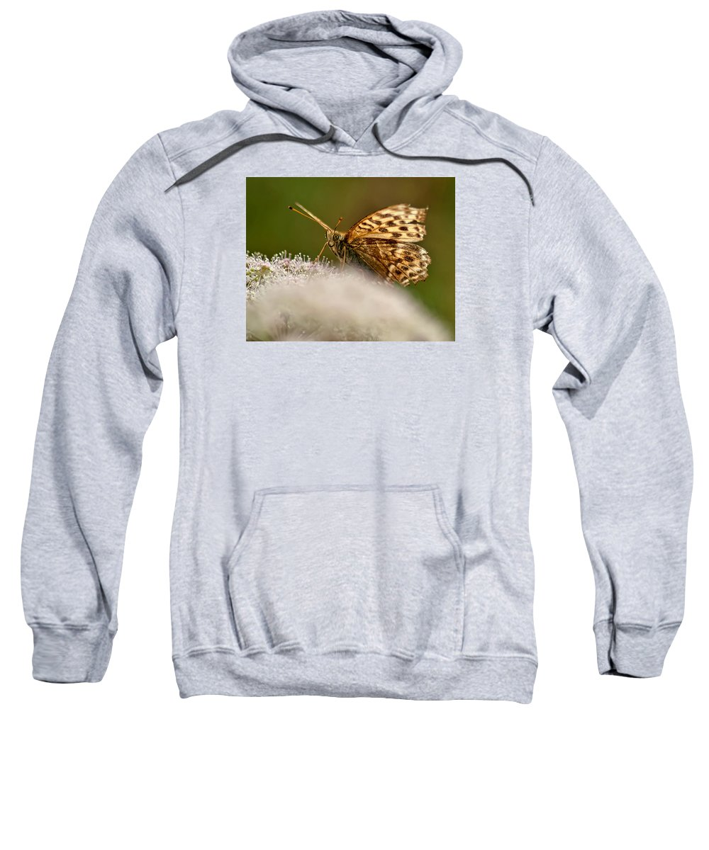 Butterfly Sweatshirt featuring the photograph Butterfly by Krzysztof Dac