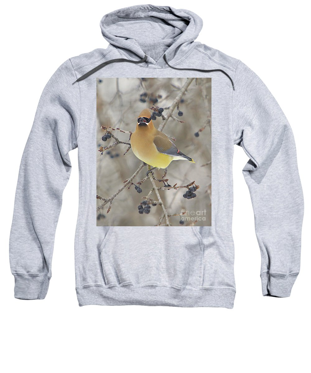 Cedar Wax Wing Sweatshirt featuring the photograph Cedar Wax Wing by Robert Pearson