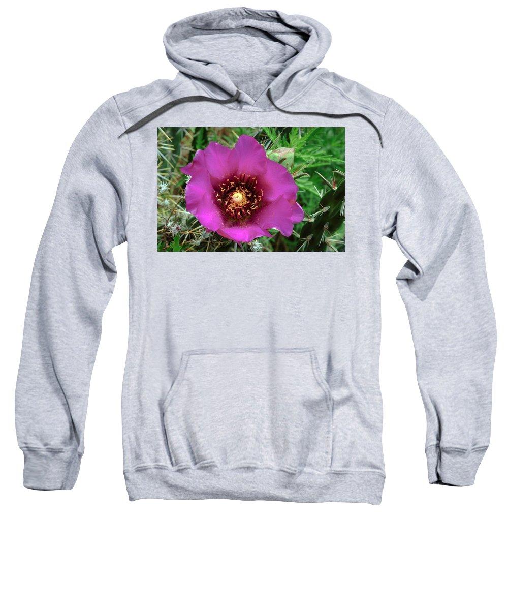 Cholla Cactus Flower Sweatshirt featuring the photograph Cholla Cactus Flower by Tikvah's Hope