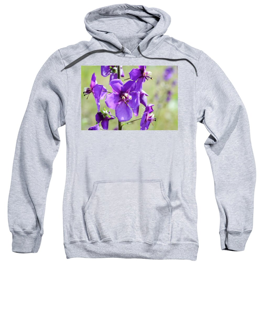 Verbascum Sweatshirt featuring the photograph Close Up Of Verbascum Phoeniceum by Alain De Maximy