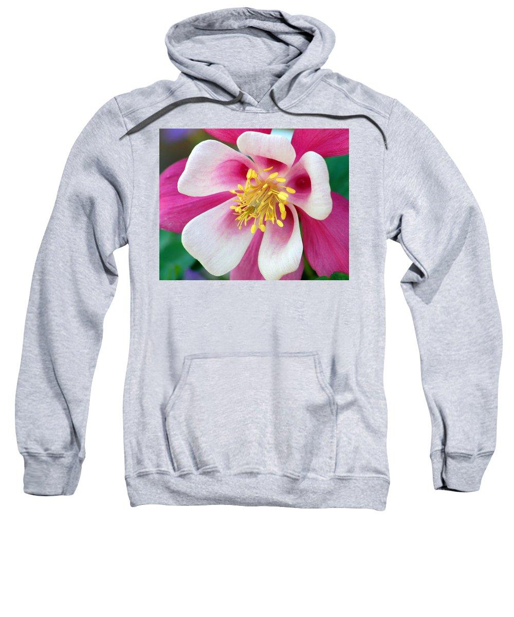 Columbine Sweatshirt featuring the photograph Columbine Flower 1 by Amy Fose