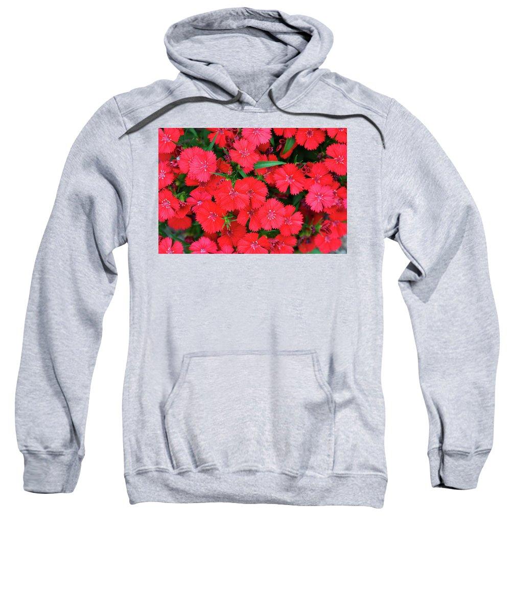 Abundance Sweatshirt featuring the photograph Dianthus by Diane Macdonald