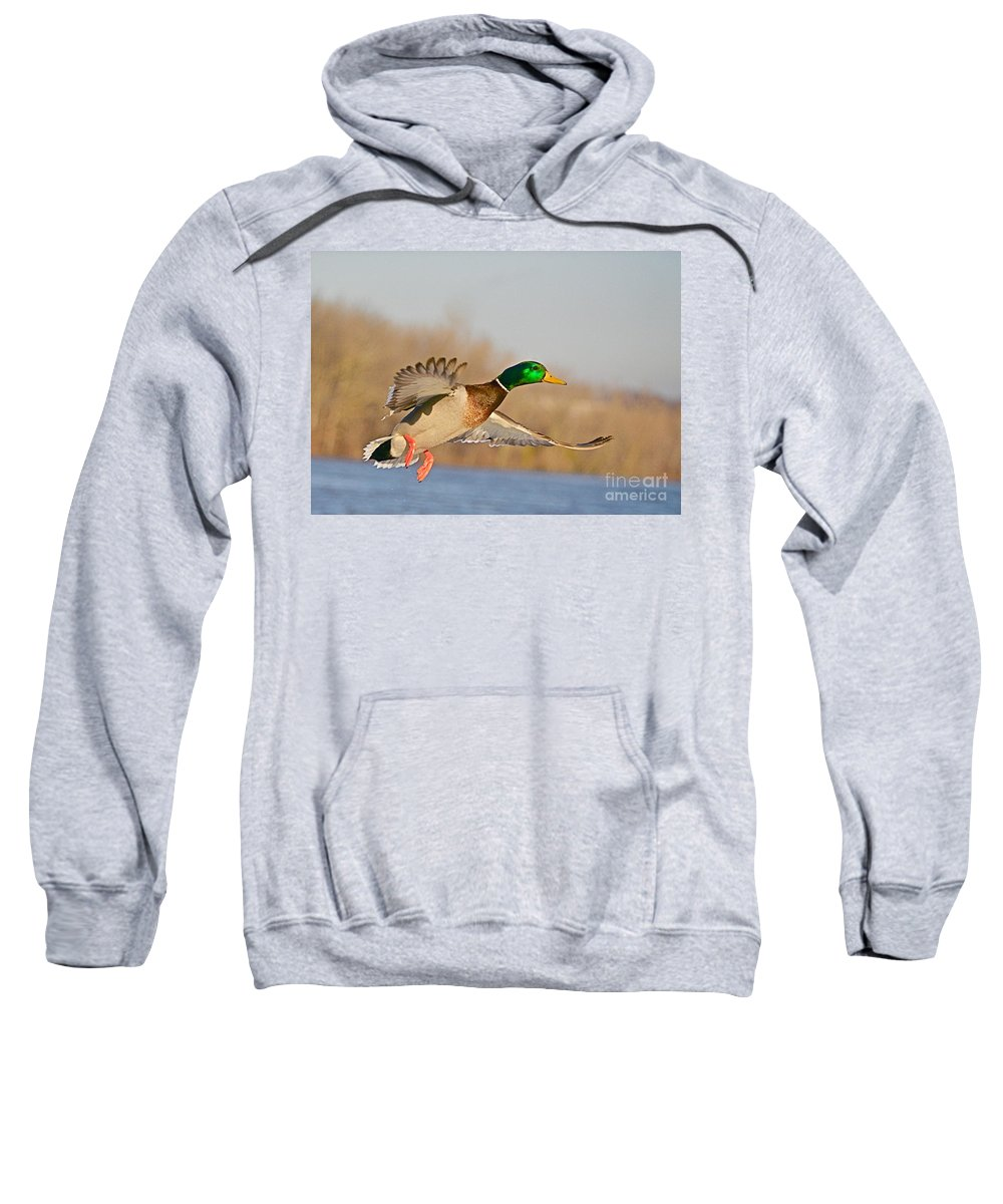 Mallard Sweatshirt featuring the photograph Fly By by Robert Pearson