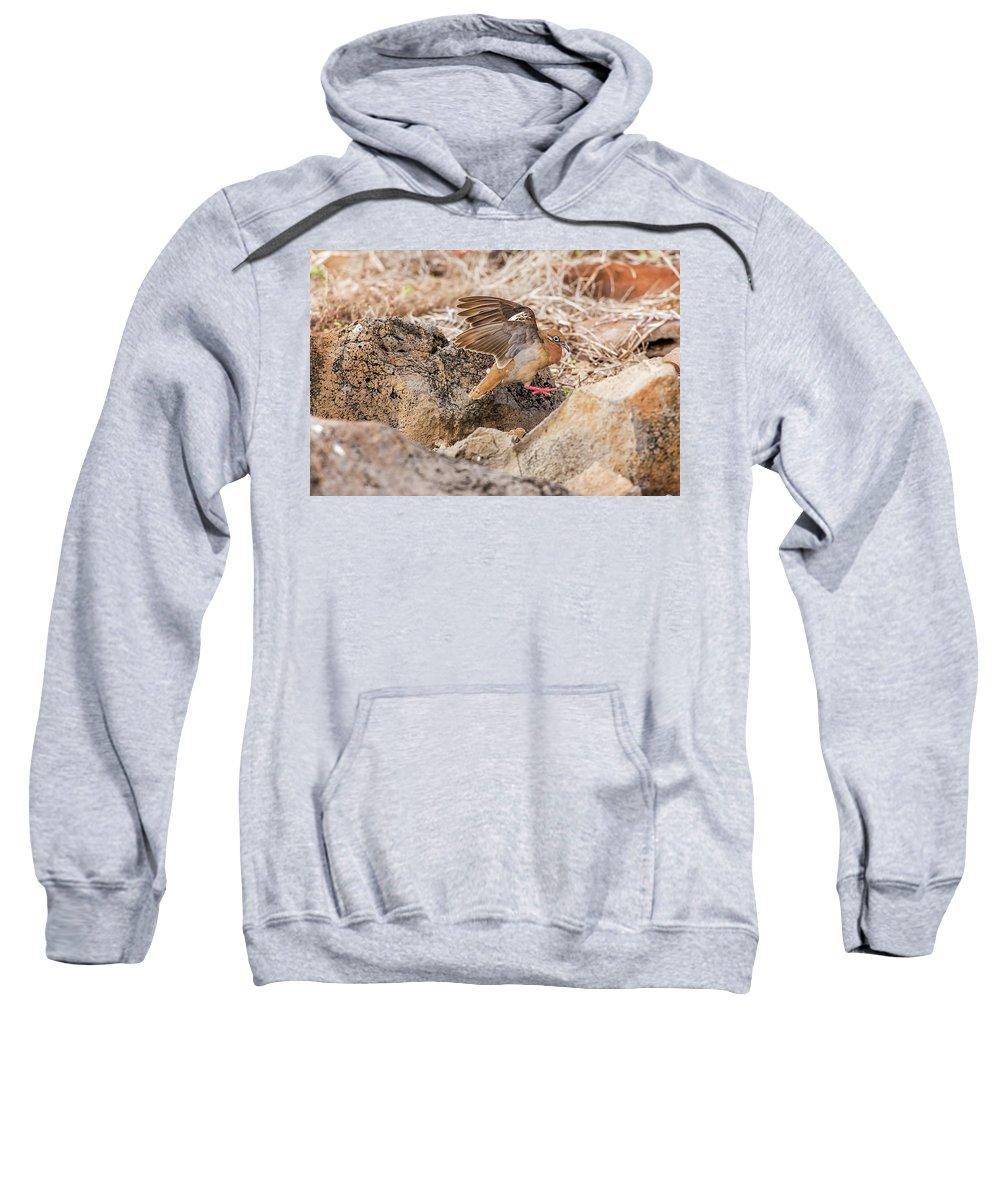 Galapagos Sweatshirt featuring the photograph Galapagos Dove In Espanola Island. by Marek Poplawski