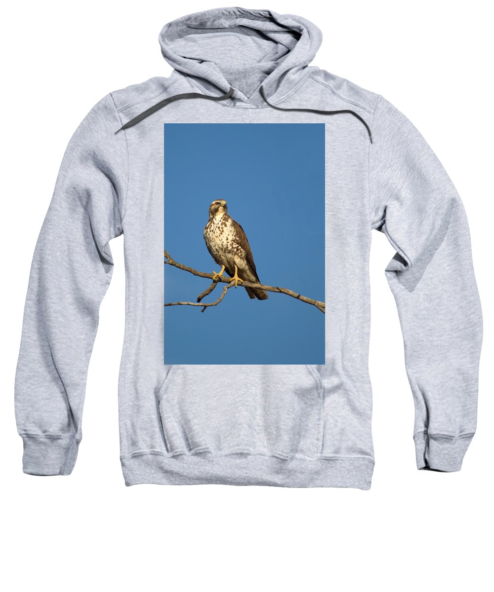 Nature Sweatshirt featuring the photograph Get My Good Side by Crystal Massop