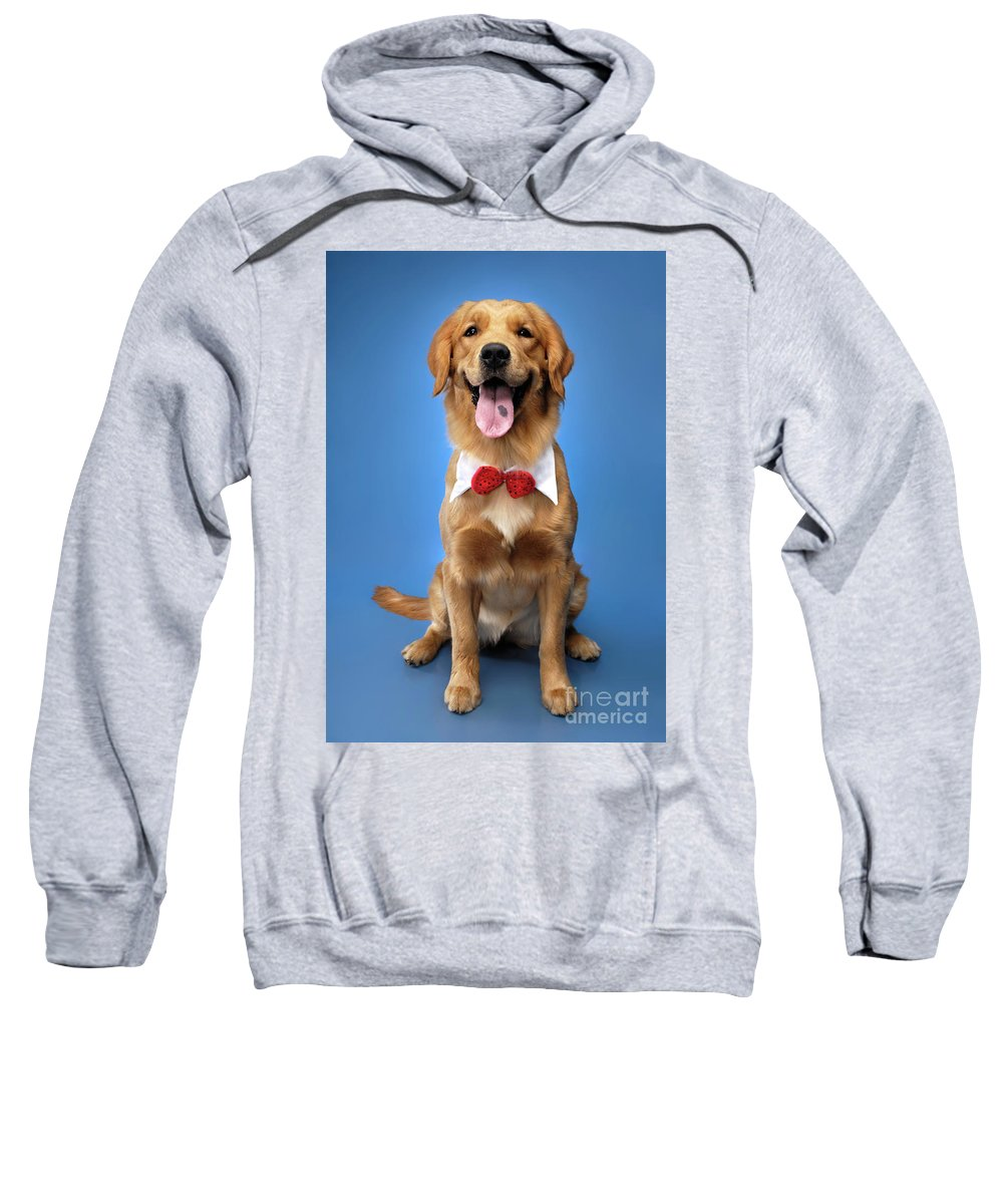 Golden Retriever Sweatshirt featuring the photograph Golden Retriever by Oleksiy Maksymenko