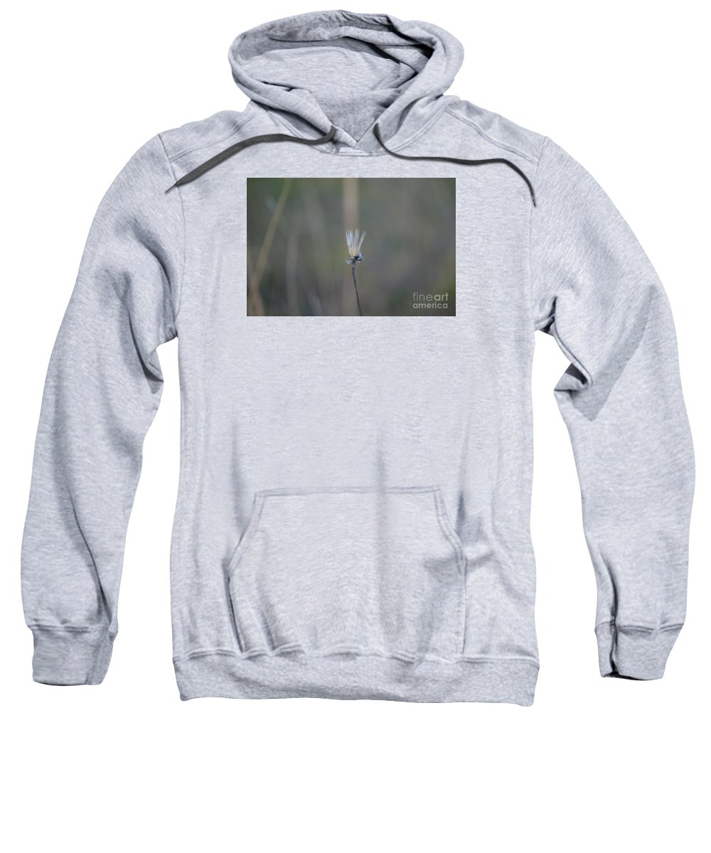 Eva Maria Nova Sweatshirt featuring the photograph Graceful Aging by Eva Maria Nova