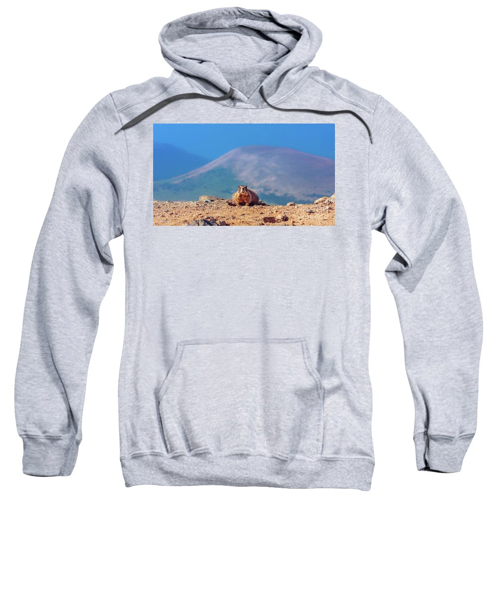 Mount Evans Sweatshirt featuring the photograph Landscape With Marmot by Natalia Kochina