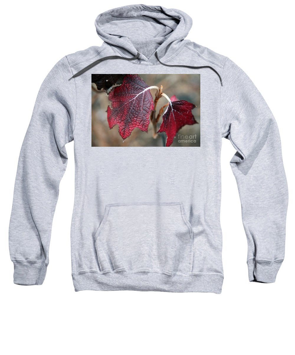Fall Sweatshirt featuring the photograph Leaves by Amanda Barcon