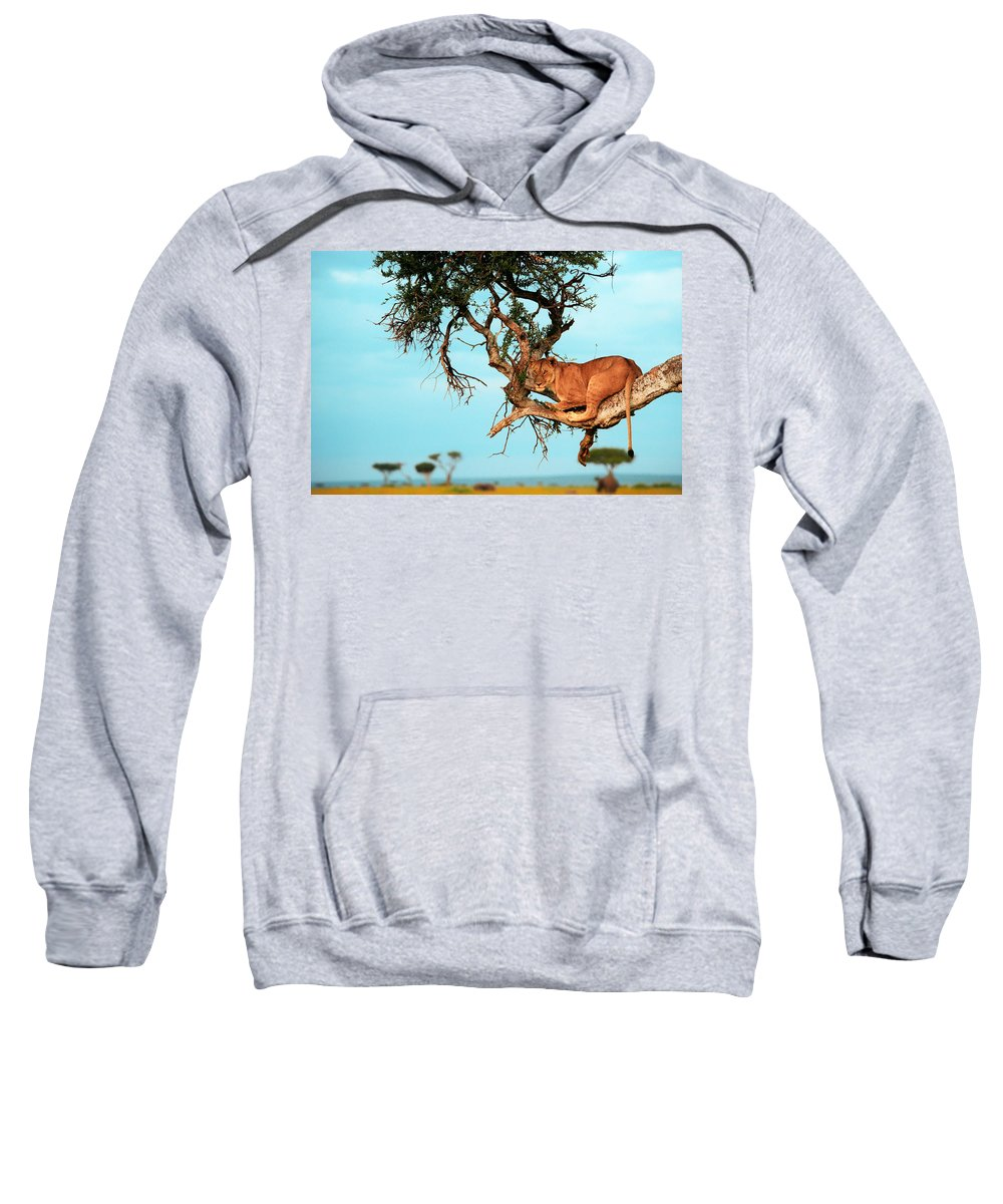 Africa Sweatshirt featuring the photograph Lioness In Africa by Sebastian Musial