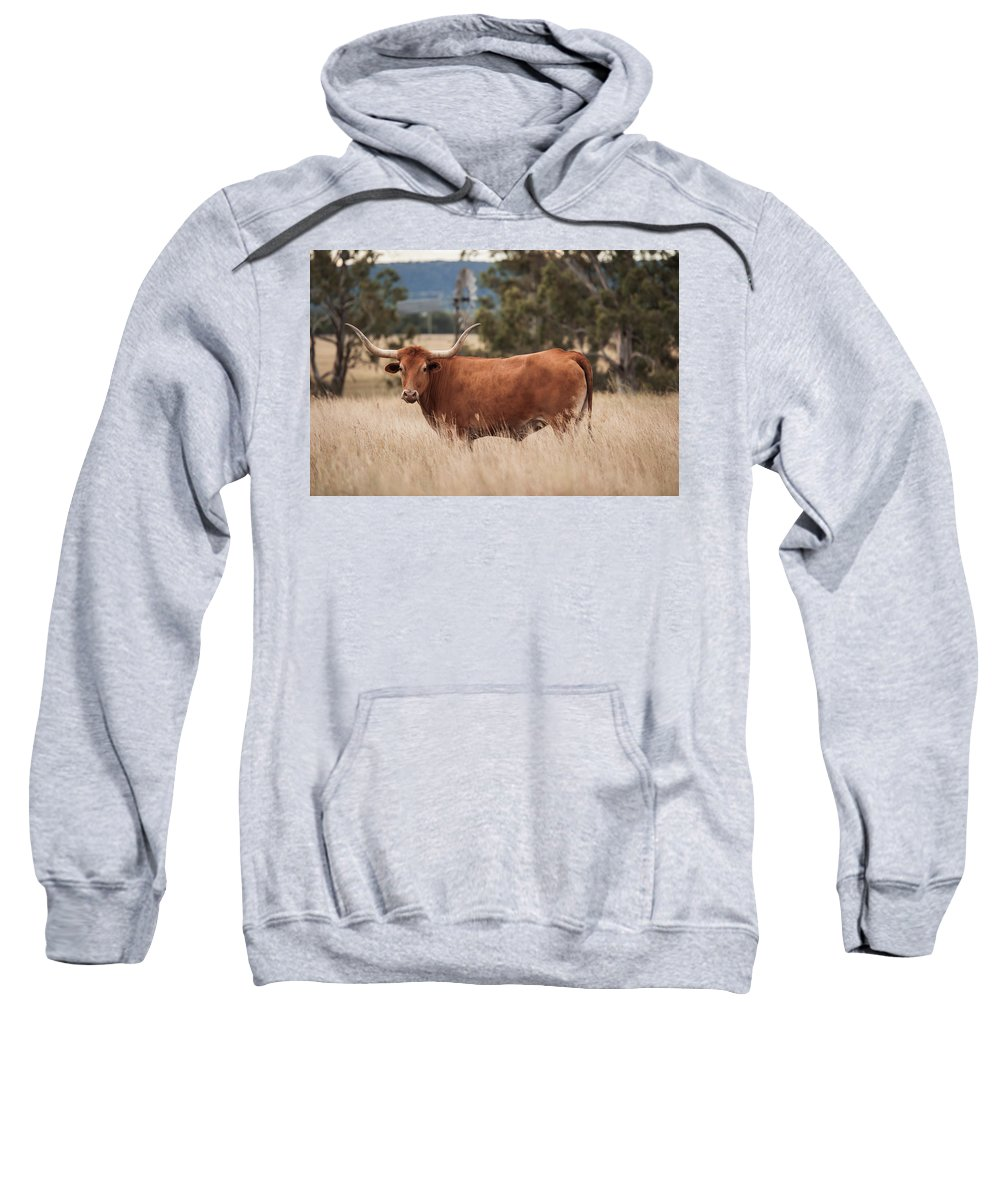 Cow Sweatshirt featuring the photograph Longhorn Cow In The Paddock by Rob D