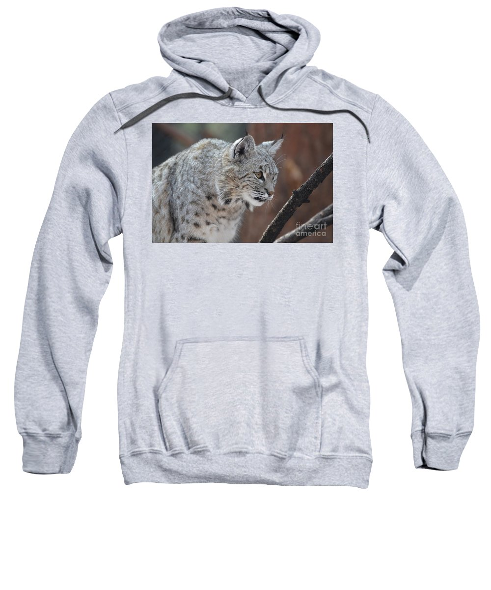 Bobcat Sweatshirt featuring the photograph Lynx In A Crouch Ready To Pounce by DejaVu Designs