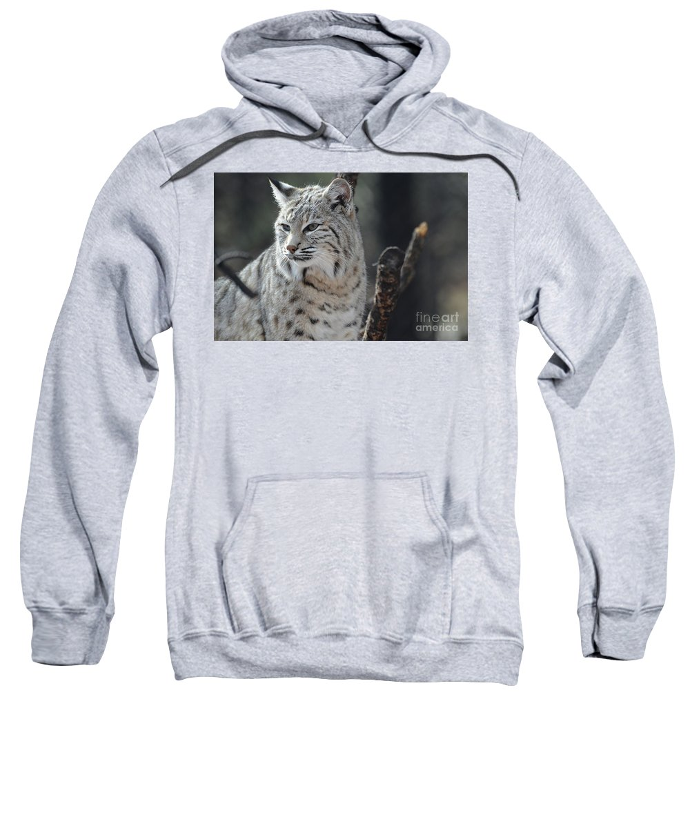Bobcat Sweatshirt featuring the photograph Lynx Looking Around At His Environment by DejaVu Designs