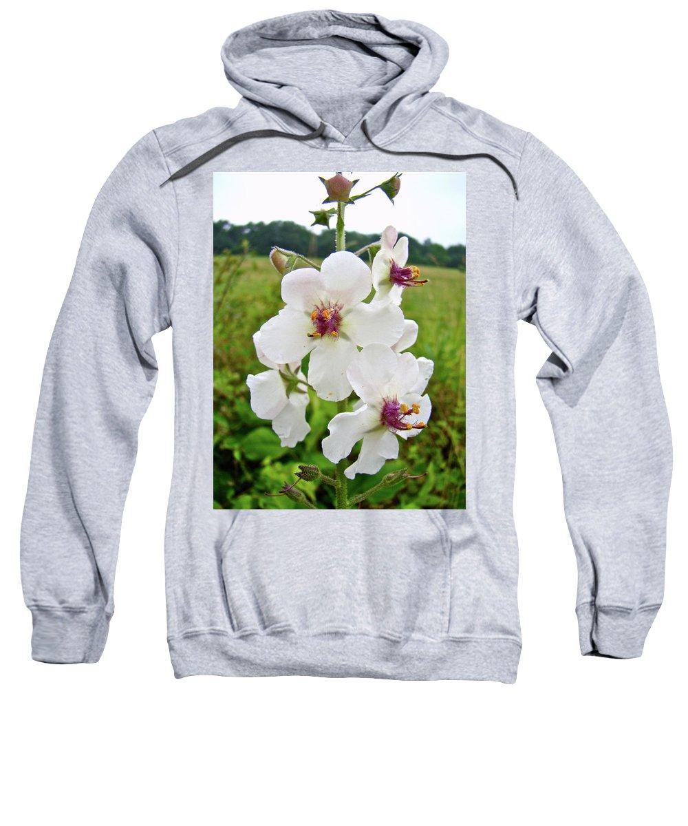 Wildflower Sweatshirt featuring the photograph Moth Mullein Wildflowers - Verbascum Blattaria by Mother Nature