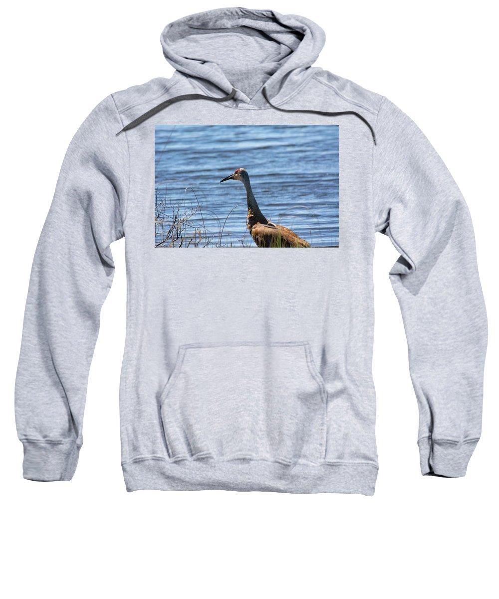Sandhill Crane Sweatshirt featuring the photograph Near The Water by Linda Kerkau