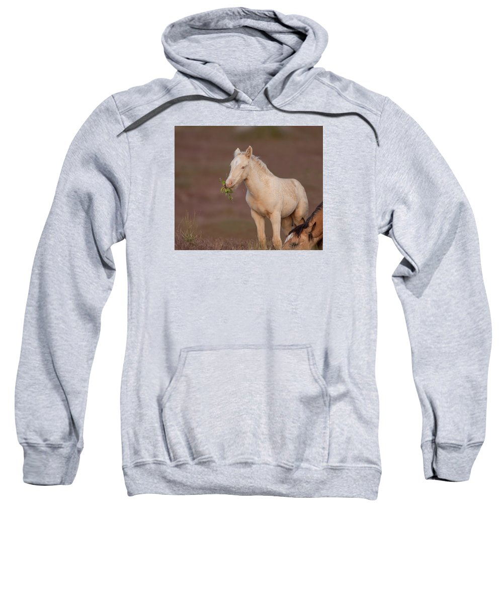 Wild Horse Sweatshirt featuring the photograph One Month Old by Kent Keller