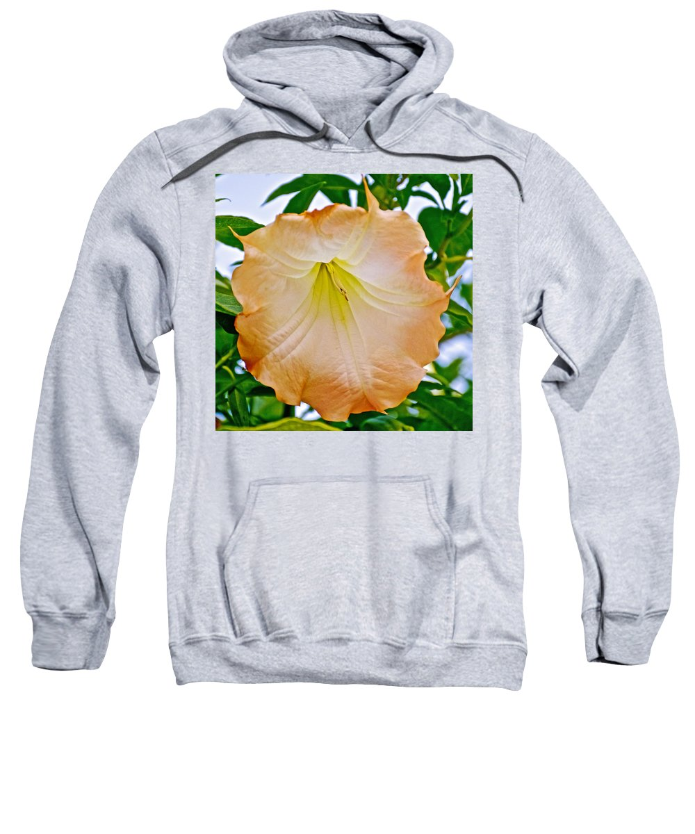 Peach Angel's Trumpetr At Pilgrim Place In Claremont Sweatshirt featuring the photograph Peach Angel's Trumpet At Pilgrim Place In Claremont-california by Ruth Hager