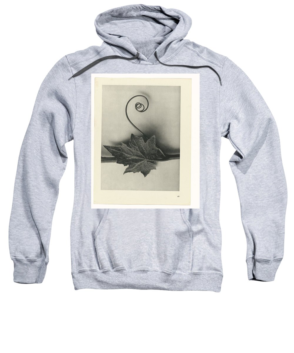 Flower Sweatshirt featuring the painting Plant Studies, 1928, Nature Series, By Karl Blossfeldt by Karl Blossfeldt