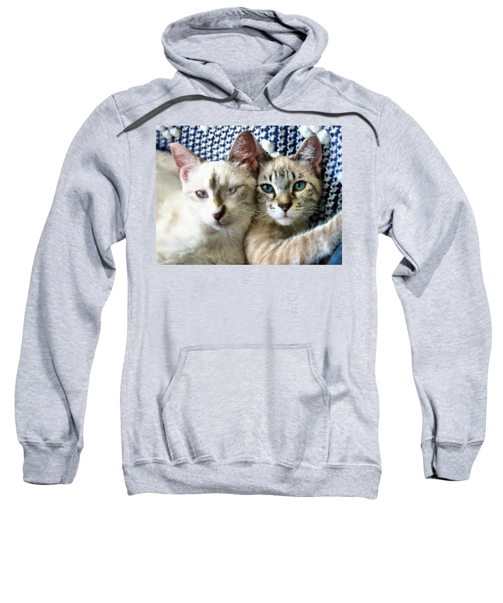 Cat Sweatshirt featuring the photograph Rescued And Spoiled by Kristin Elmquist