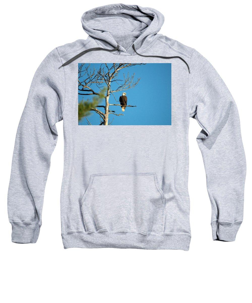 Nature Sweatshirt featuring the photograph Searching by Linda Kerkau